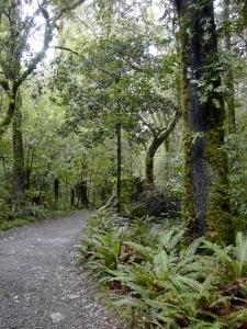 Tararua walk Oct 06